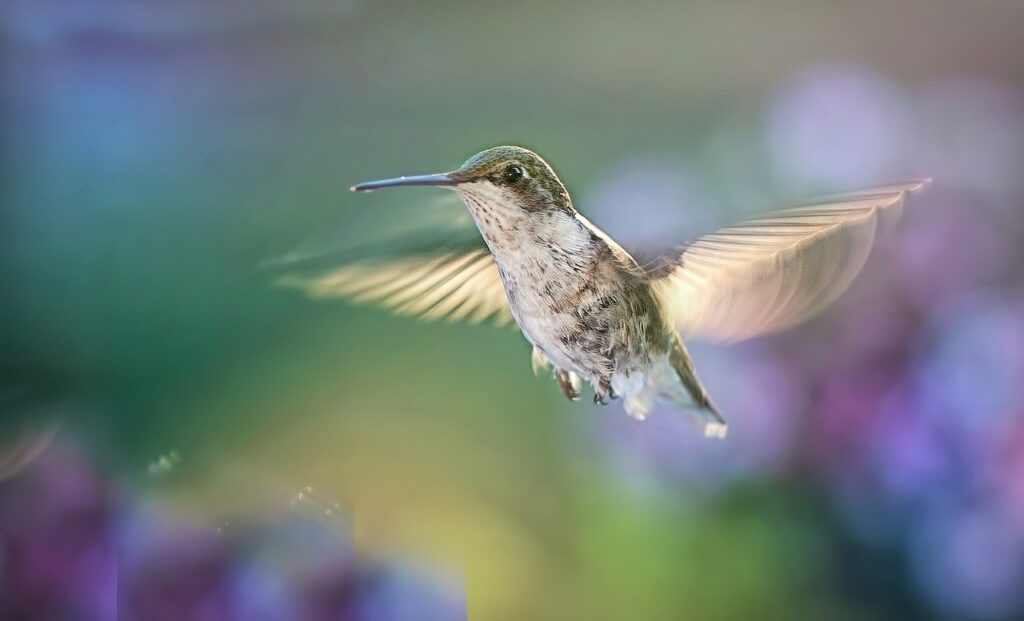 hummingbird, flying, bird