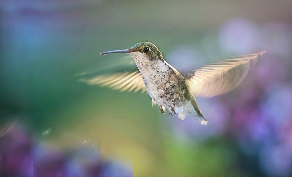 hummingbird, flying, bird
